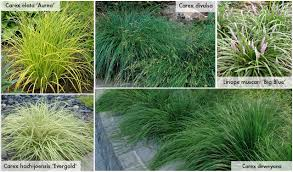 shade grasses take root with dennis 7 dees