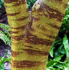 trees with ornamental bark mike s garden top 5 plants
