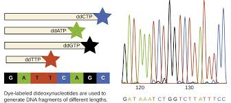 visualizing and characterizing dna rna and protein microbiology