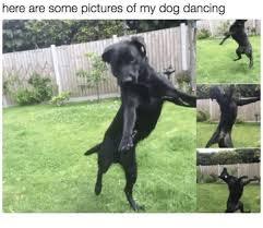 Dancing Dog Meme - 25 best memes about dog dance dog dance memes