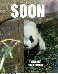 Meme Soon - soon i will give you cuddles panda memes and comics