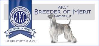 afghan hound therapy dog aaawww afghan hounds hosanna akc registered dog breeder home page