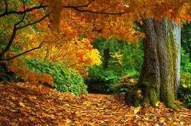 imagenes de otoño para fondo de escritorio fondo escritorio paisaje bosque otoño