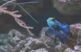 freshwater fish you will never believe these bizarre truth of freshwater fish