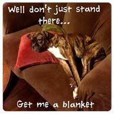 boxer dog funny 481 best boxer dog images on pinterest boxer puppies boxer love