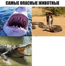 Alligator Meme - create meme alligator funny animal saltwater crocodile