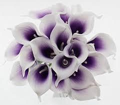 Calla Lily Flower Purple Calla Lily Flowers Amazon Com