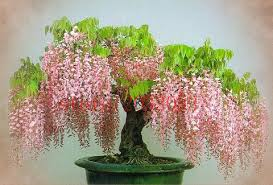 indoor decorative trees for the home beautiful collection modern