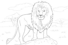 awesome coloring pages lions tigers photos podhelp
