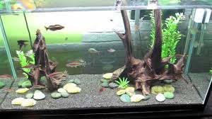 90 gallon freshwater tank youtube