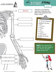 bones in the human body arms worksheet education com
