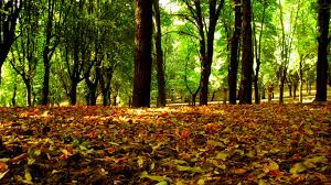 forest leaves wallpaper autumn nature wallpapers in jpg format for