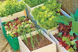 gem se pflanzen balkon sabines garten gemüse vom eigenen balkon coopzeitung die