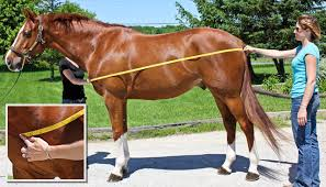 How To Measure For A Rug How To Measure A Horse For A Blanket It U0027s Show Time