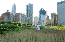 Urban Gardens Chicago The Lurie Garden At Millennium Park U2014 Ggn