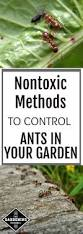 how to control ants in your garden naturally and safely
