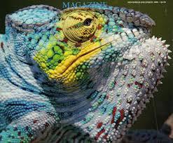 animal color neuroanthropology