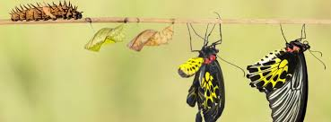 onf caterpillar metamorphoses into open source butterfly telecoms com