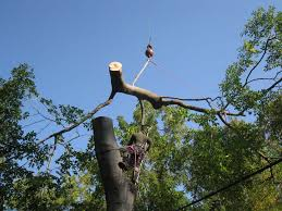 arbor man llc portfolio of tree work livonia michigan tree