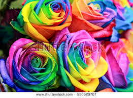 multicolored roses rainbow stock images royalty free images vectors