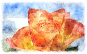watercolor roses watercolor painting of beautiful rose a