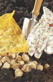 gardening gift ideas brighten the holidays home and garden