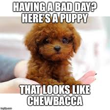 Chewbacca Memes - having a bad day here s a puppy that looks like chewbacca meme