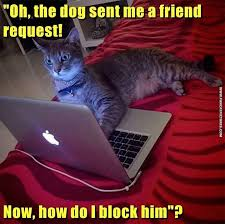 Cat Laptop Meme - when the cat got a friend request from the dog fun cat pictures