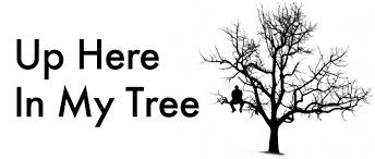 up here in my tree two nights into the tour and i am really