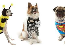 dogs in halloween costumes korrectkritterscom