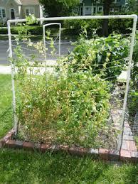 vertical gardening how to build a pvc trellis minneapolis homestead