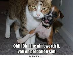 Cat Fight Meme - chill chill he ain t worth it you on probation son funny fight