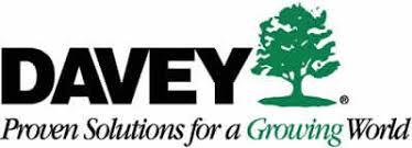 davey tree professional tree care since 1880
