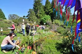 native plant nursery santa cruz california native plant sale april 18 2015 at the regional parks