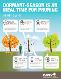 fall tree care 101 dormant pruning