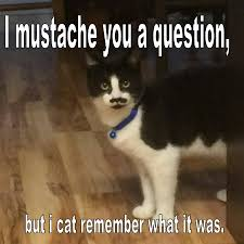 Make Your Own Cat Meme - make your own meme home facebook