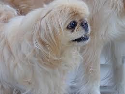 our pets u2013 green acres kennel shop blog