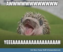 Baby Animal Memes - excited animal memes image memes at relatably com