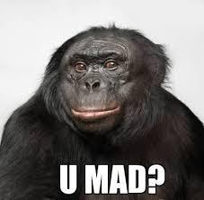 Baboon Meme - baboons ass meme google search jokes and funny stuff