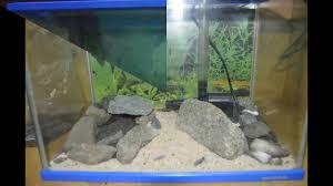 membuat filter aquarium kecil how to hardscape cichlid fish tank for small aquarium youtube