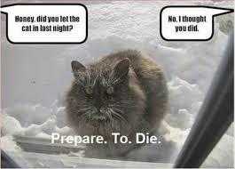 Mad Kitty Meme - 11 best mad kittys images on pinterest cute kittens funny stuff