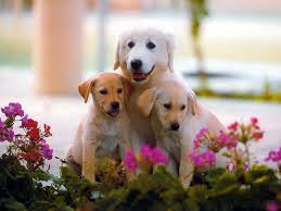 cute backgrounds for desktop cute dog wallpapers wallpaper cave