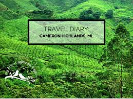 cameron highlands getaway by my brown paper packages