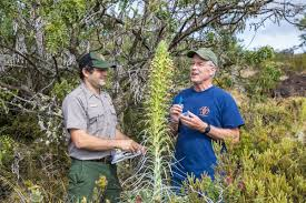 native plant species big isle biologists save native plant species from extinction