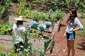edible garden with lauri kranz