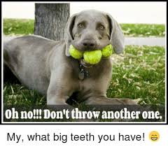 Big Teeth Meme - oh no don tthrow another one my what big teeth you have