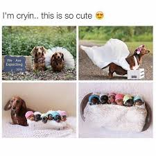 Cute Dog Memes - 60 of the happiest dog memes ever veriy