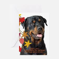 rottweiler thanksgiving greeting cards cafepress