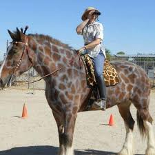 Halloween Costumes Horse Horse Costume Giraffe Horse Costume Horses Learn