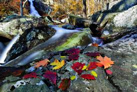 autumn leaves near waterfall foliage free nature pictures by